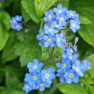 Wild-Flower-Garden-Derby-Student-Accommodation-Blue-i-Properties