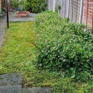 Wildflower-Garden-Derby-Student-Accommodation-Blue-i-Properties